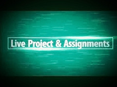 Live Projects , Assignments and SEO Service